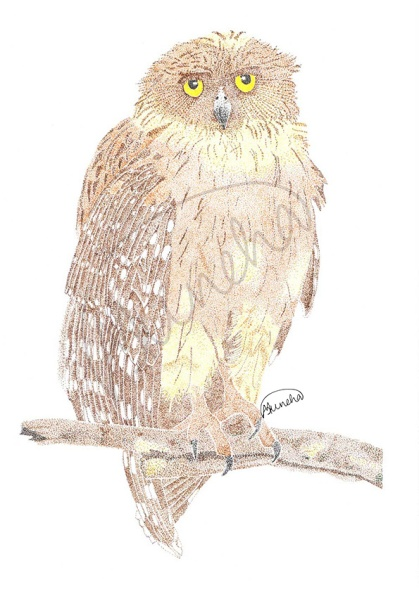 Resident by the stream- Brown Fish Owl