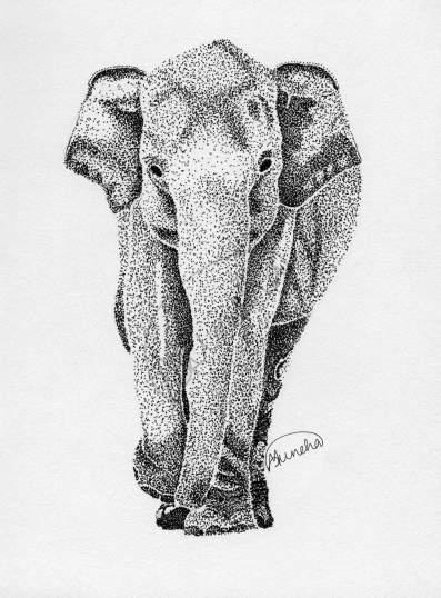 elephant_headon