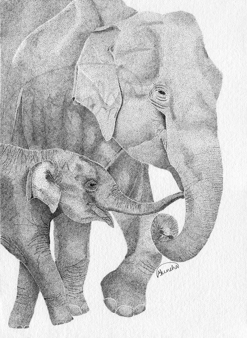 elephant_mothercalf
