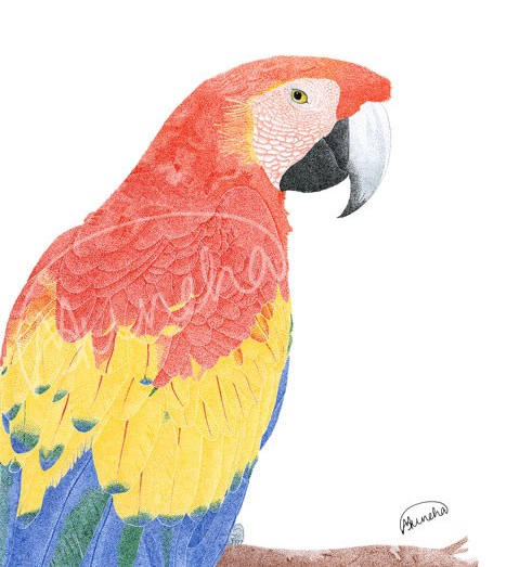 Overwhelming colours of a Macaw